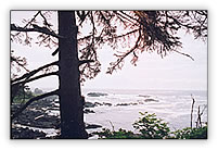 Ucluelet Wild Side Trail